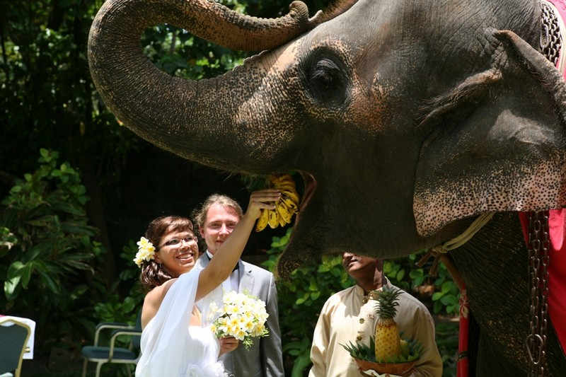 Sri Lanka Slub 16